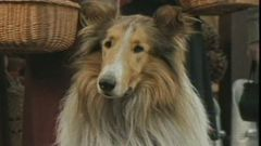 Lassie Scene: Lassie And Toots Put On A Show