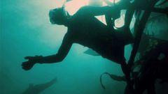 Dark Tide: Return To The Water